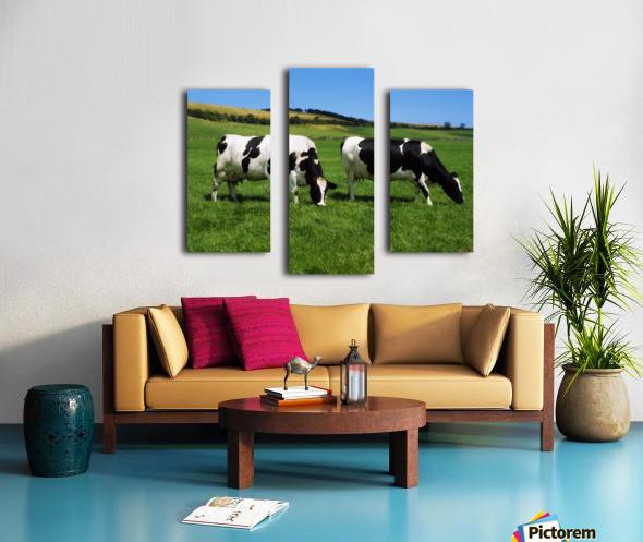 County Cork, Ireland, Dairy Cattle Canvas print