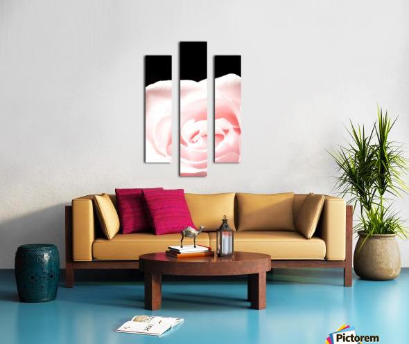 Pink Rose, Close-Up Canvas print