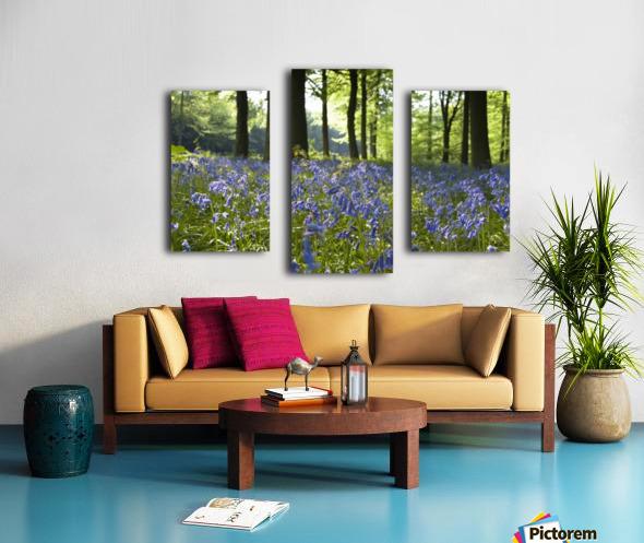 Bluebells On Forest Floor Canvas print