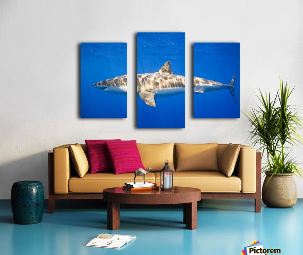 Great White Shark (Carcharodon Carcharias) Canvas print