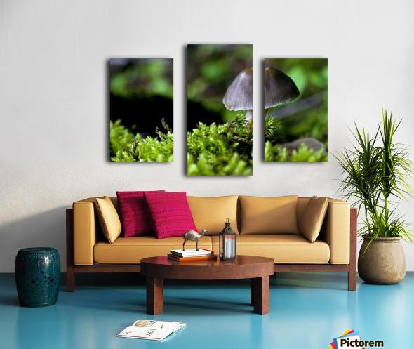 Closeup Of Mushroom Canvas print