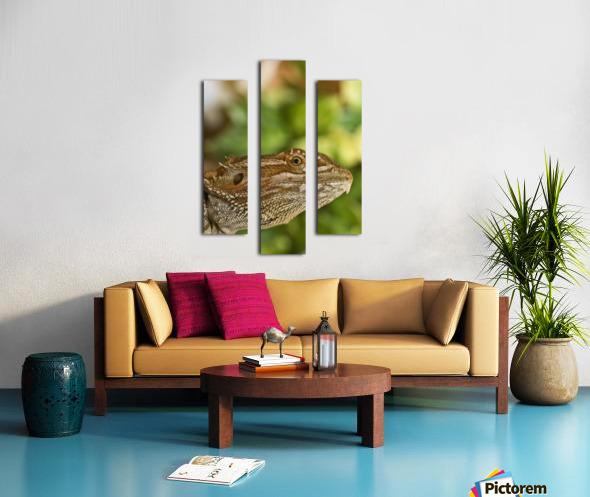 Bearded Dragon Lizard Canvas print