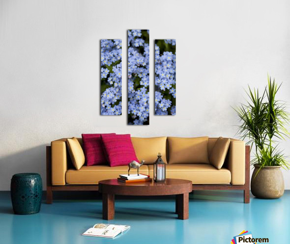 Victoria, British Columbia, Canada; Blooming Blue Flowers Canvas print