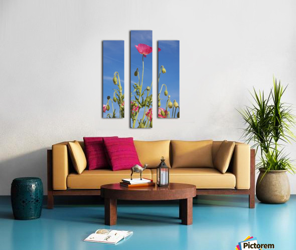 Red Flower Against Blue Sky Canvas print