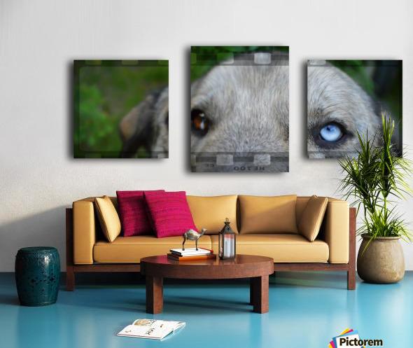 Blue Eyed Dog Canvas print