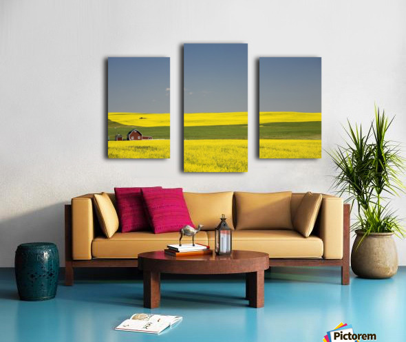 Flowering Canola Fields And A Red Barn; Alberta, Canada Canvas print