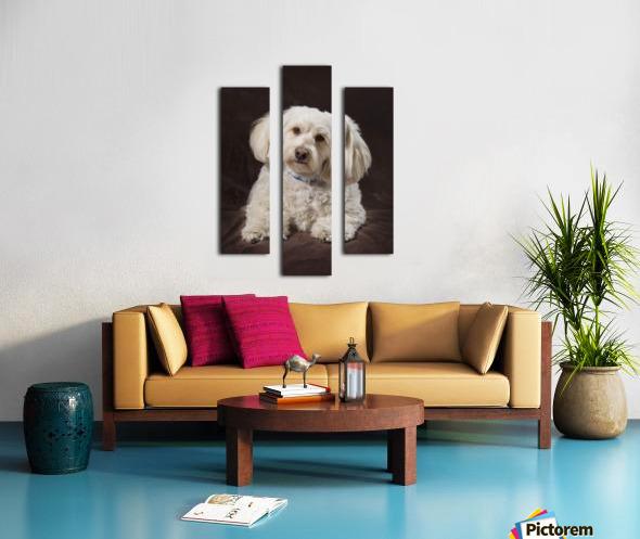 Shih Tzu-Poodle On A Brown Muslin Backdrop Canvas print