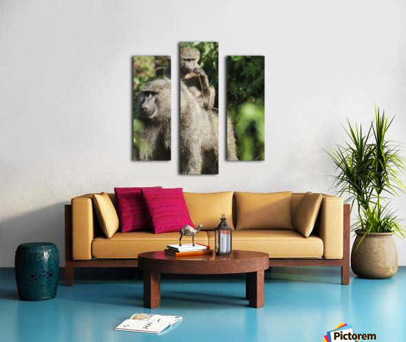 A monkey and it's baby sitting on her back in the maasai mara national reserve;Maasai mara kenya Canvas print
