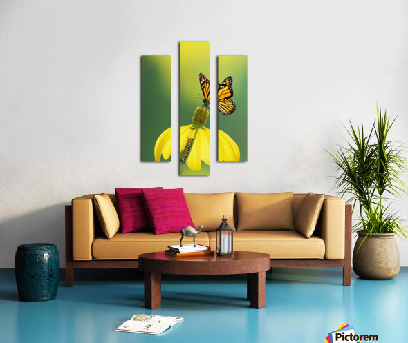 Caterpillar to butterfly;British columbia canada Canvas print