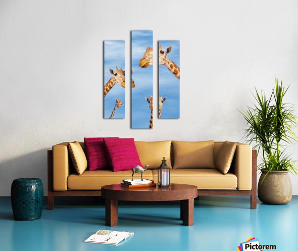 Four giraffes looking downward;Africa Canvas print