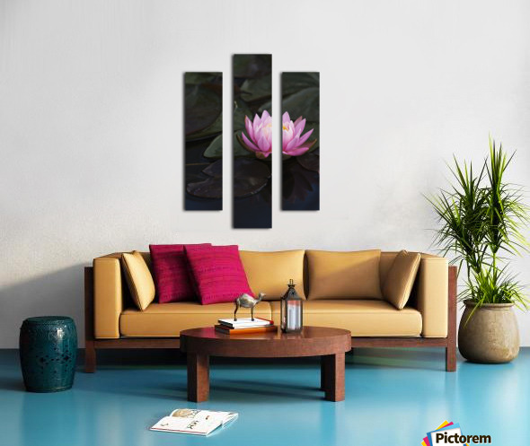 A water lily blooms in a pond; Astoria, Oregon, United States of America Canvas print
