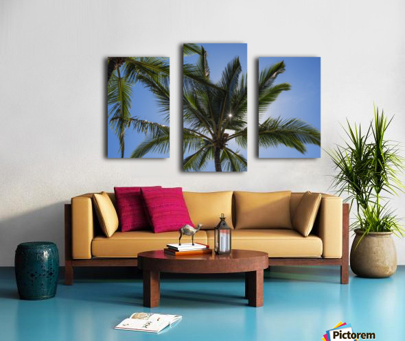 Coconut Palms backlit by the sunlight in a blue sky; Poipu, Kauai, Hawaii, United States of America Canvas print