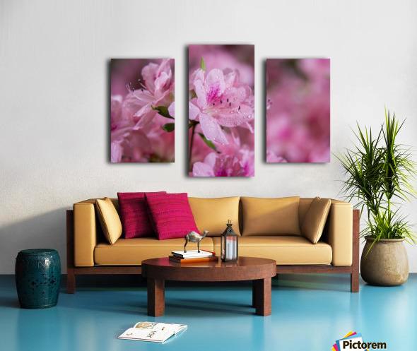 Pericat hybrid azaleas (Mrs. Fisher), Rhododendron (Ericaceae), New York Botanical Garden; New York City, New York, United States of America Canvas print