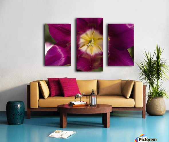 Red tulip, Andre Rieu (tulipa), New York Botanical Garden; New York City, New York, United States of America Canvas print