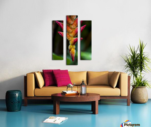 A unique tropical plant with fuzzy red and orange blossoms; Hawaii, United States of America Canvas print