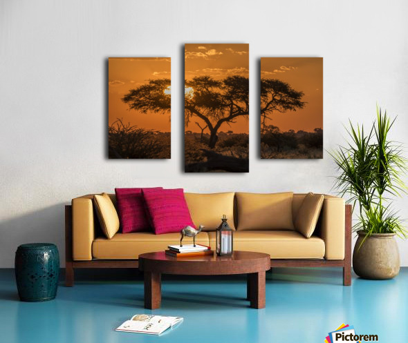 Silhouette of acacia tree at orange sunset; Botswana Canvas print