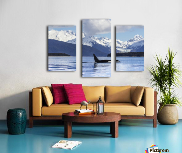 An Orca Whale (Killer Whale) (Orcinus orca) surfaces in Lynn Canal, Herbert Glacier, Inside Passage; Alaska, United States of America Canvas print