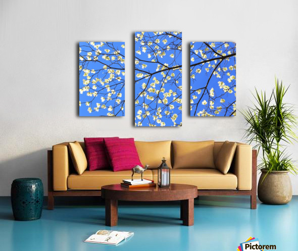 Blue Sky and Dogwood Canvas print