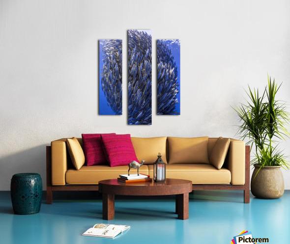 Bait ball Canvas print