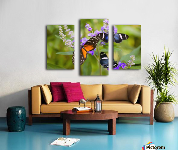 Three Colorful Butterflies On Blossoms In Spring; Oregon, Usa Canvas print