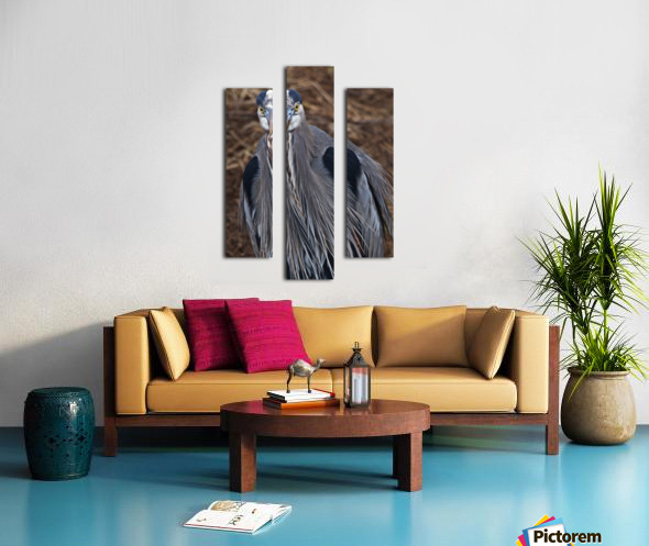Face on view of great blue heron Canvas print
