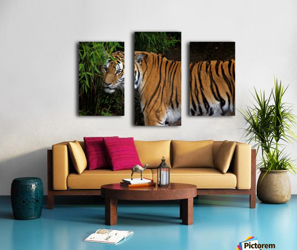 Female Tiger Canvas print