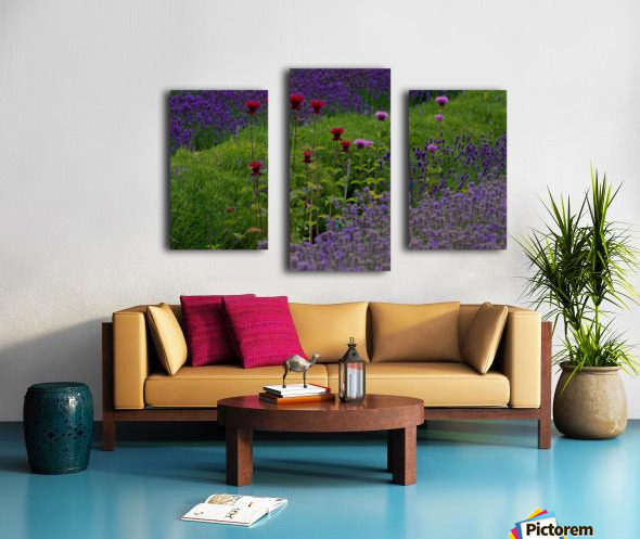 Bee Balm Blooming in Lavender Field Canvas print
