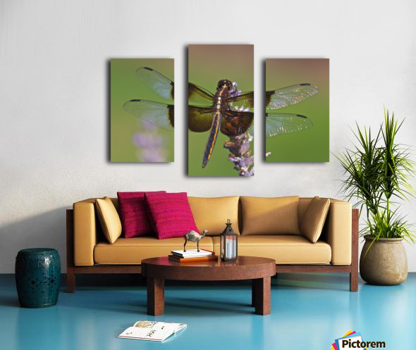 Dragonfly on Lavender Canvas print