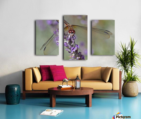Dragonfly resting on flower. Canvas print