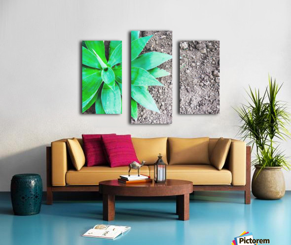 green leaf plant with sand background Canvas print
