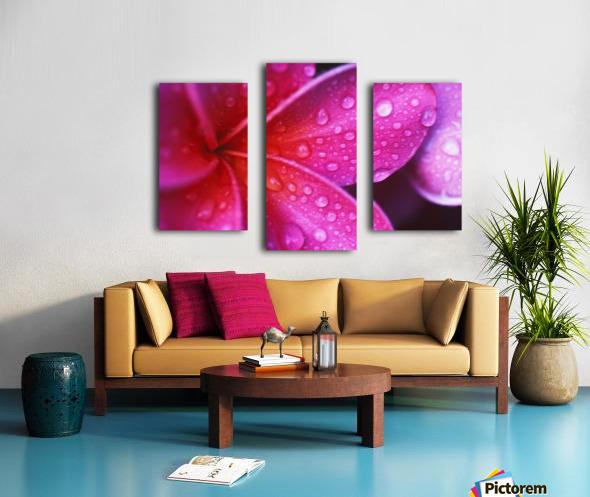 Hawaii, Maui, Extreme Close-Up Purple Pink Plumeria Blossom Water Droplets Aka Frangipani Canvas print