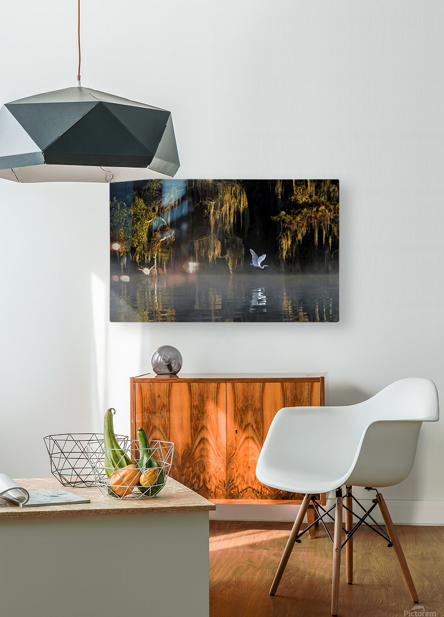 Egret  HD Metal print with Floating Frame on Back