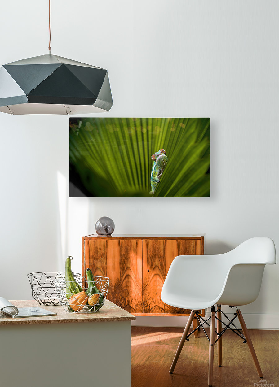 What Is That  HD Metal print with Floating Frame on Back