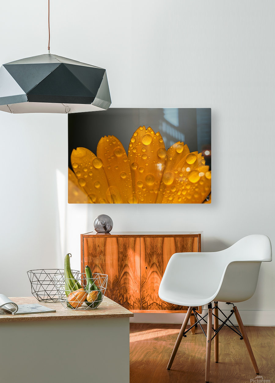 Close up of water droplets on orange flower petals; South Shields, Tyne and Wear, England  HD Metal print with Floating Frame on Back