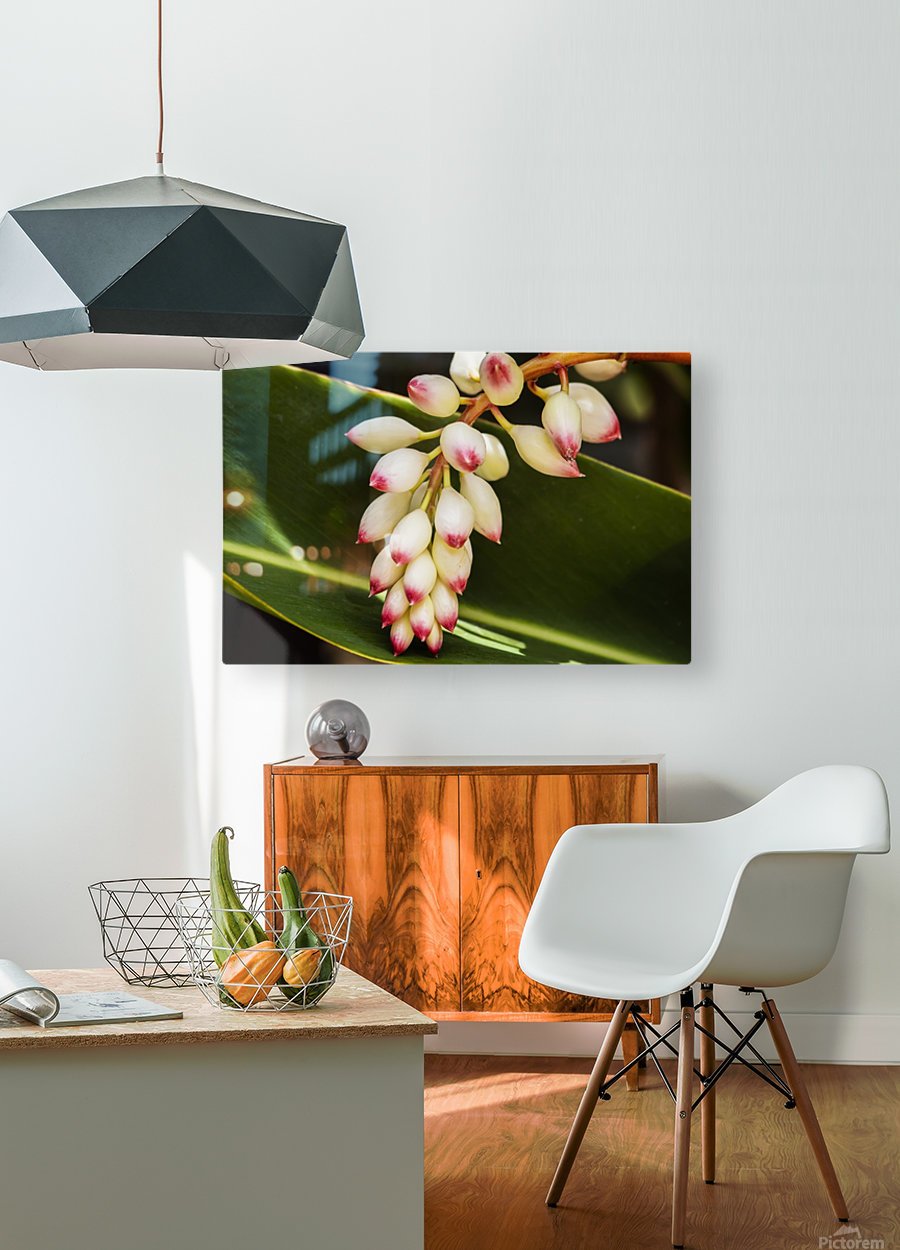 Close-up of white ginger flower Alpinia; Maui, Hawaii, United States of America  HD Metal print with Floating Frame on Back