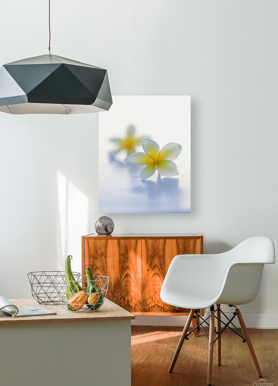 Close-up of two beautiful yellow Plumeria flowers (Apocynaceae) in soft focus; Honolulu, Oahu, Hawaii, United States of America  HD Metal print with Floating Frame on Back
