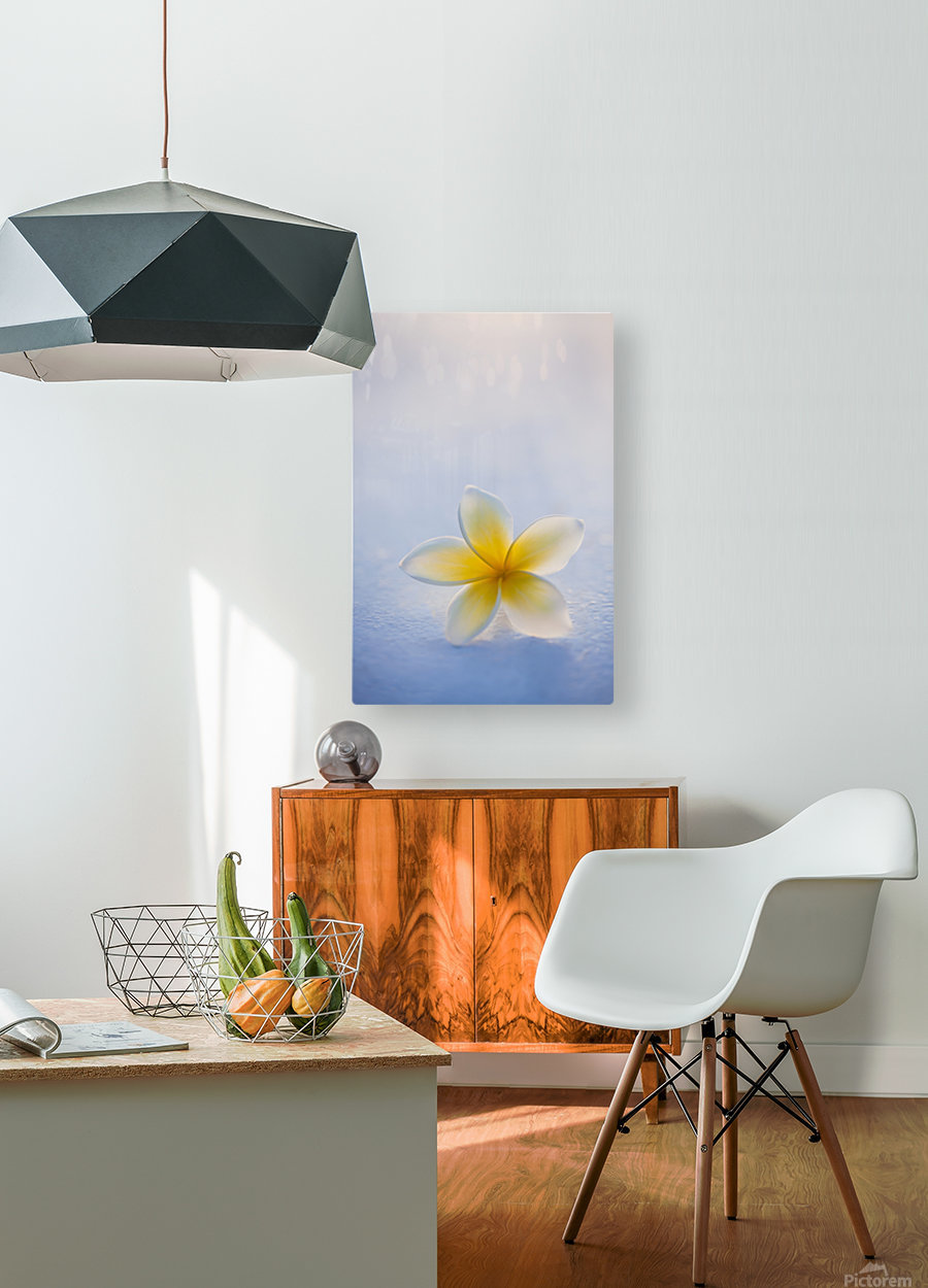 Close-up of a single beautiful yellow Plumeria flower (Apocynaceae) in soft focus; Honolulu, Oahu, Hawaii, United States of America  HD Metal print with Floating Frame on Back