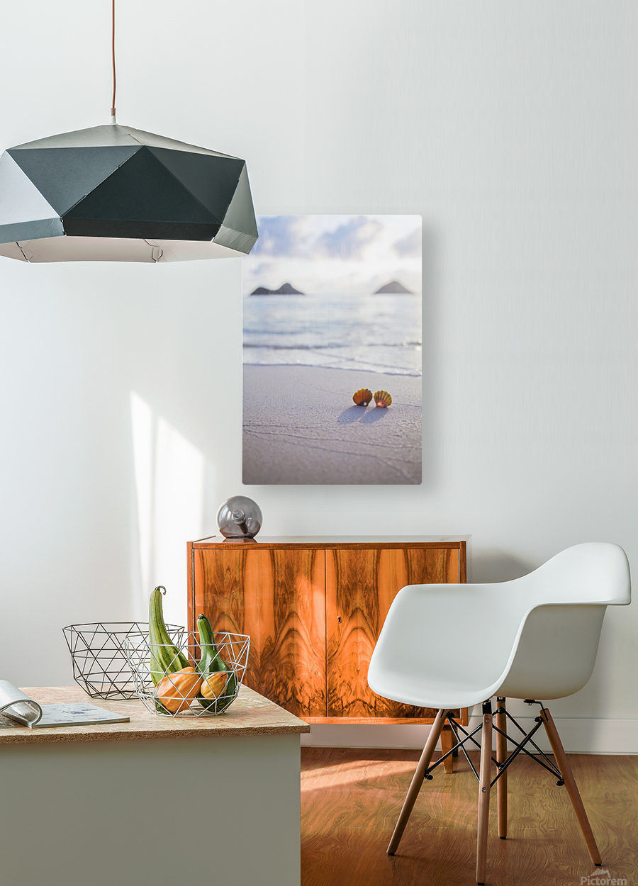 A set of two rare Hawaiian Sunrise Scallop Seashells, also known as Pecten Langfordi, in the sand at Lanikai beach, with Mokulua islands in background; Honolulu, Oahu, Hawaii, United States of America  HD Metal print with Floating Frame on Back