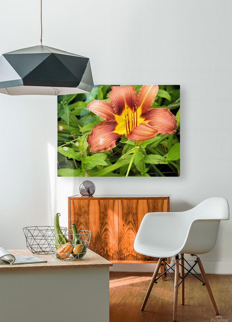 Oranger Lilly 3  HD Metal print with Floating Frame on Back
