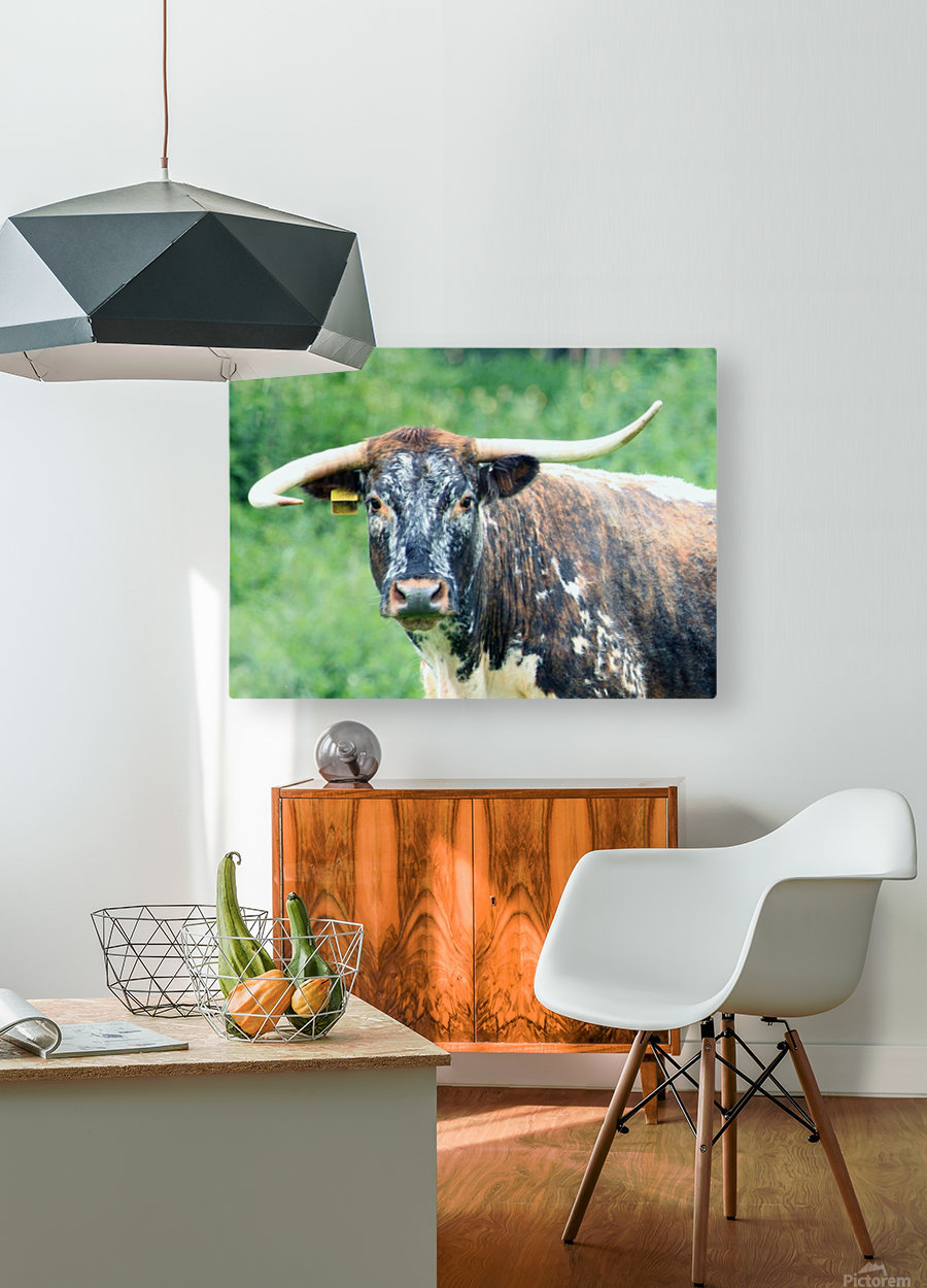 Horns  HD Metal print with Floating Frame on Back