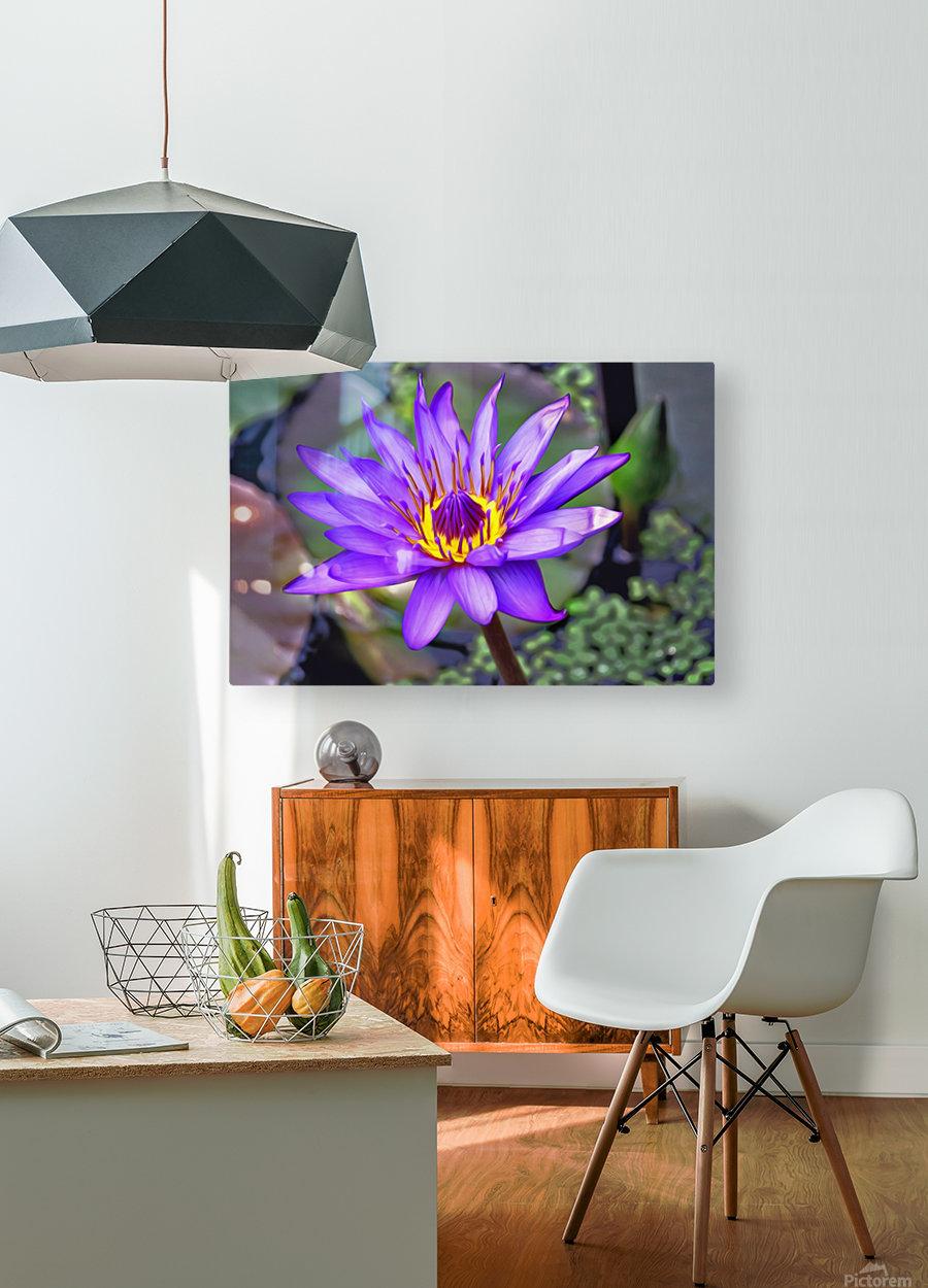 waterflower  HD Metal print with Floating Frame on Back