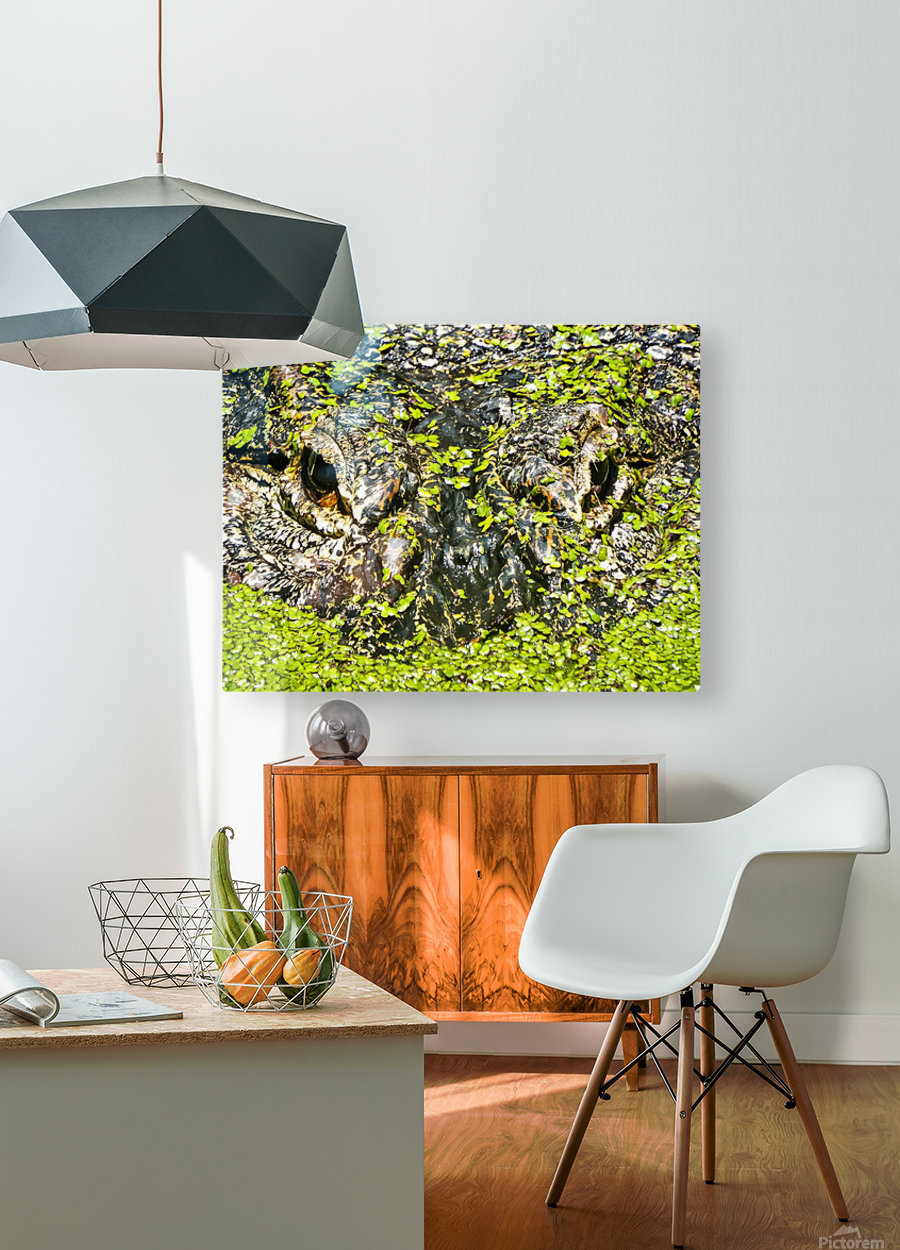 The Staredown  HD Metal print with Floating Frame on Back