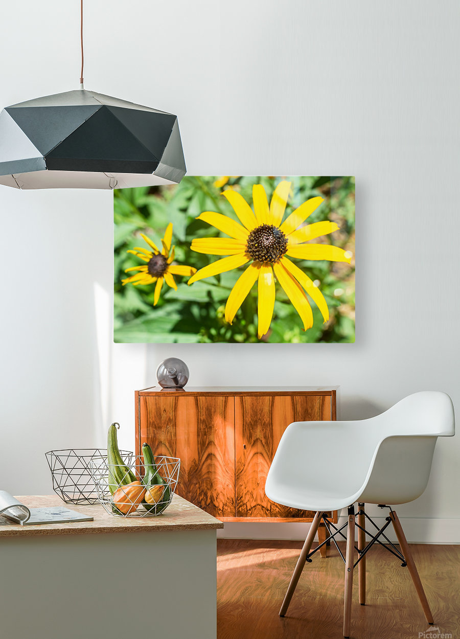 Yellow Cone Flowers   HD Metal print with Floating Frame on Back