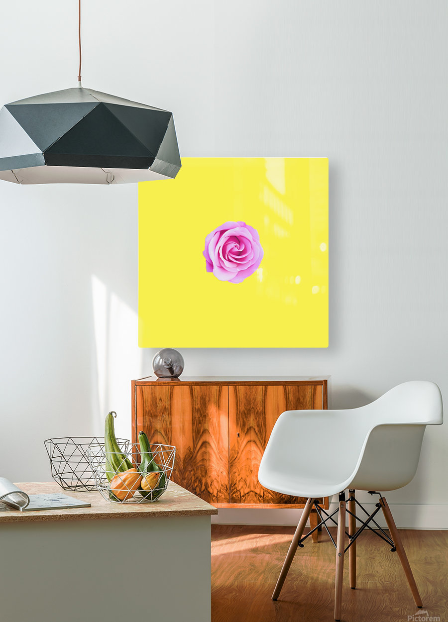 closeup pink rose with yellow background  HD Metal print with Floating Frame on Back