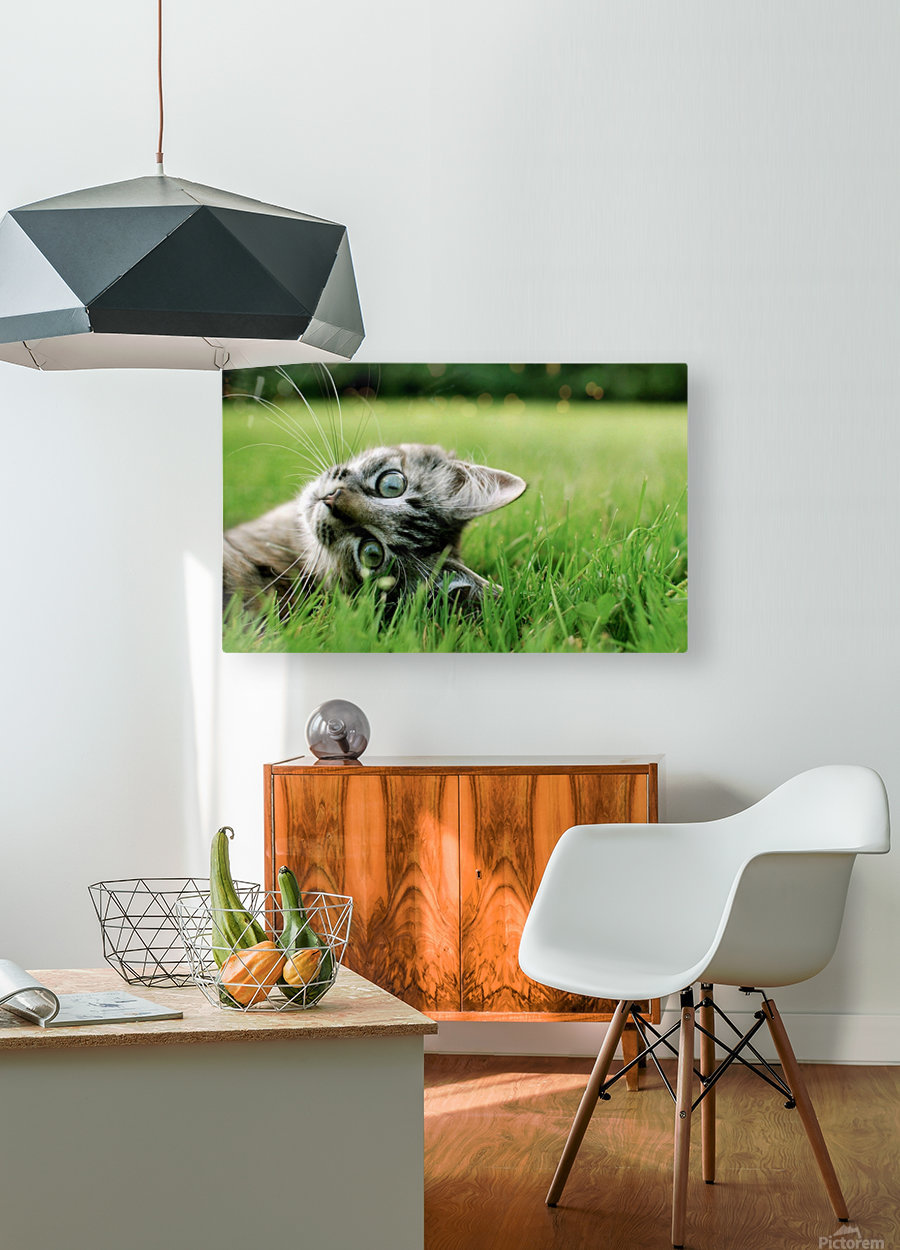 ucing  HD Metal print with Floating Frame on Back