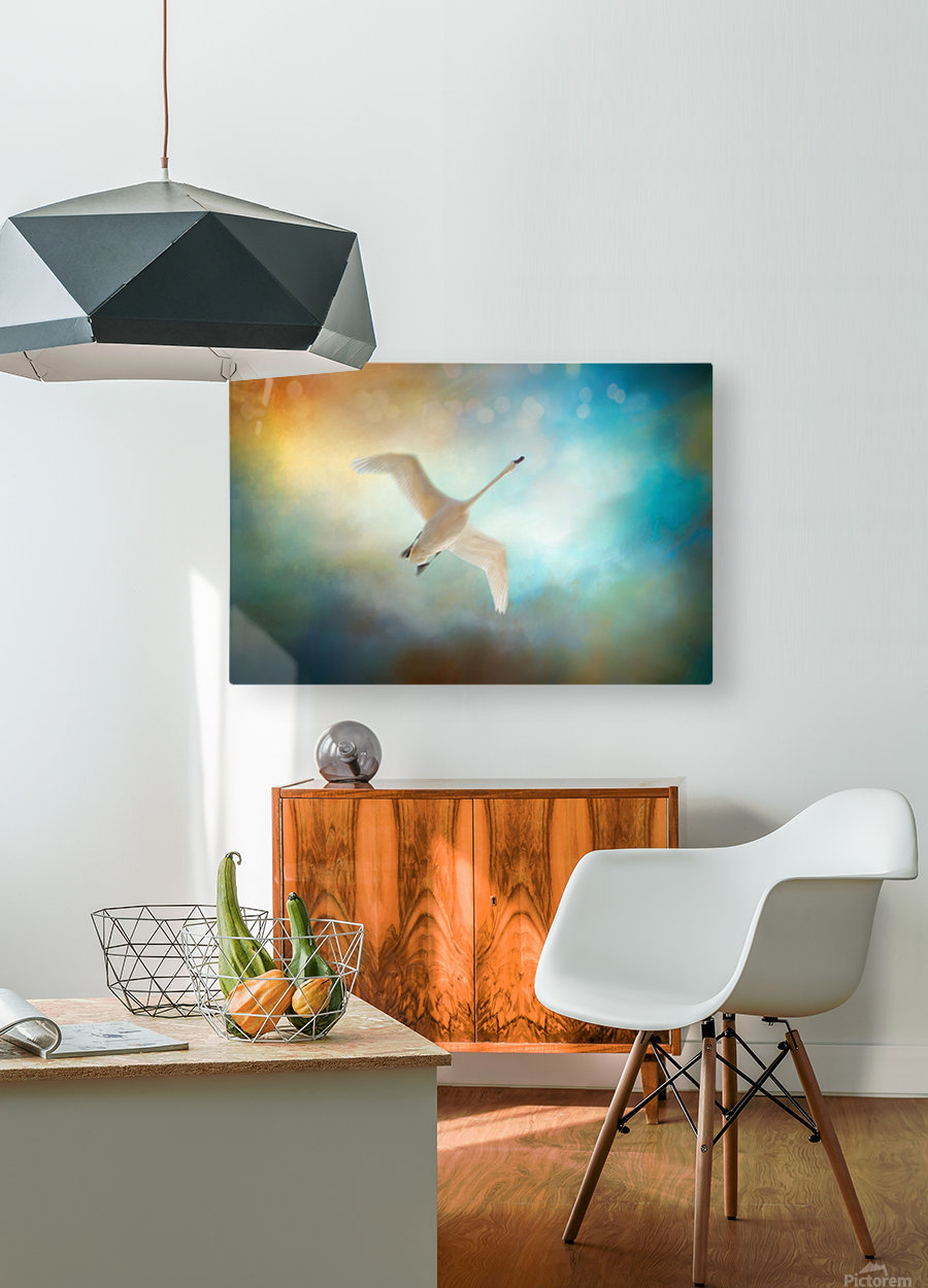 Swan Wings  HD Metal print with Floating Frame on Back
