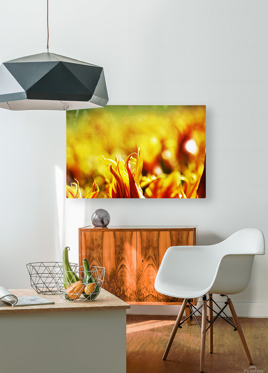 Flower Touch  HD Metal print with Floating Frame on Back
