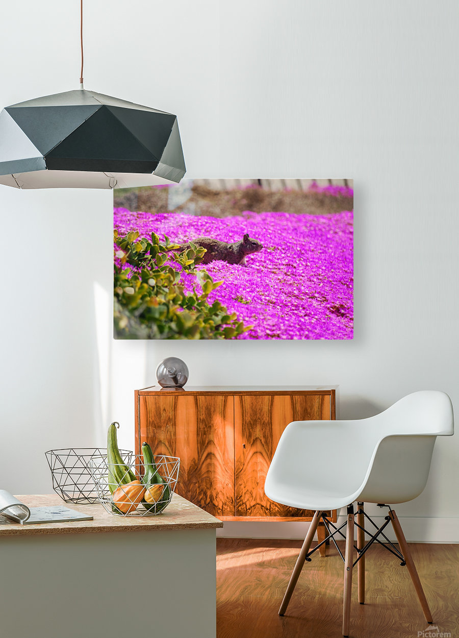 Pink Wild Flowers on a Hill With a Squirrel  HD Metal print with Floating Frame on Back