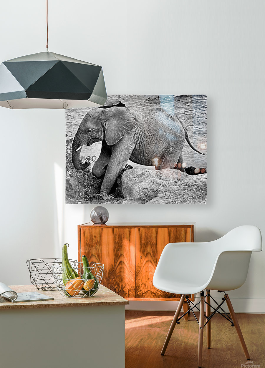 Elephant Baby  HD Metal print with Floating Frame on Back