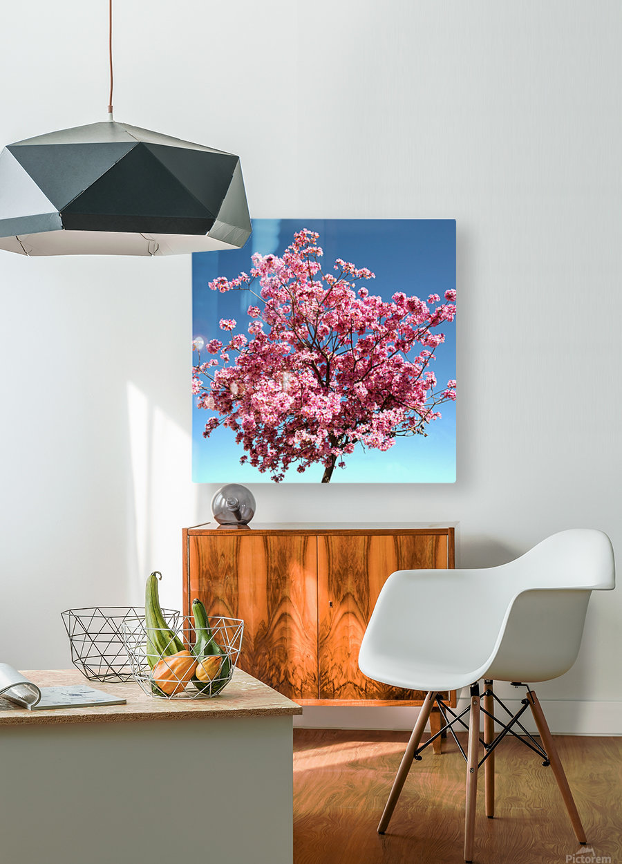 Cherry Blossom on Blue  HD Metal print with Floating Frame on Back